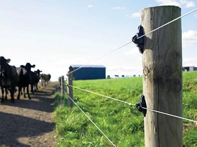 Gardul electric – Metoda numarul 1 de protectie  a animalelor din cadrul fermelor
