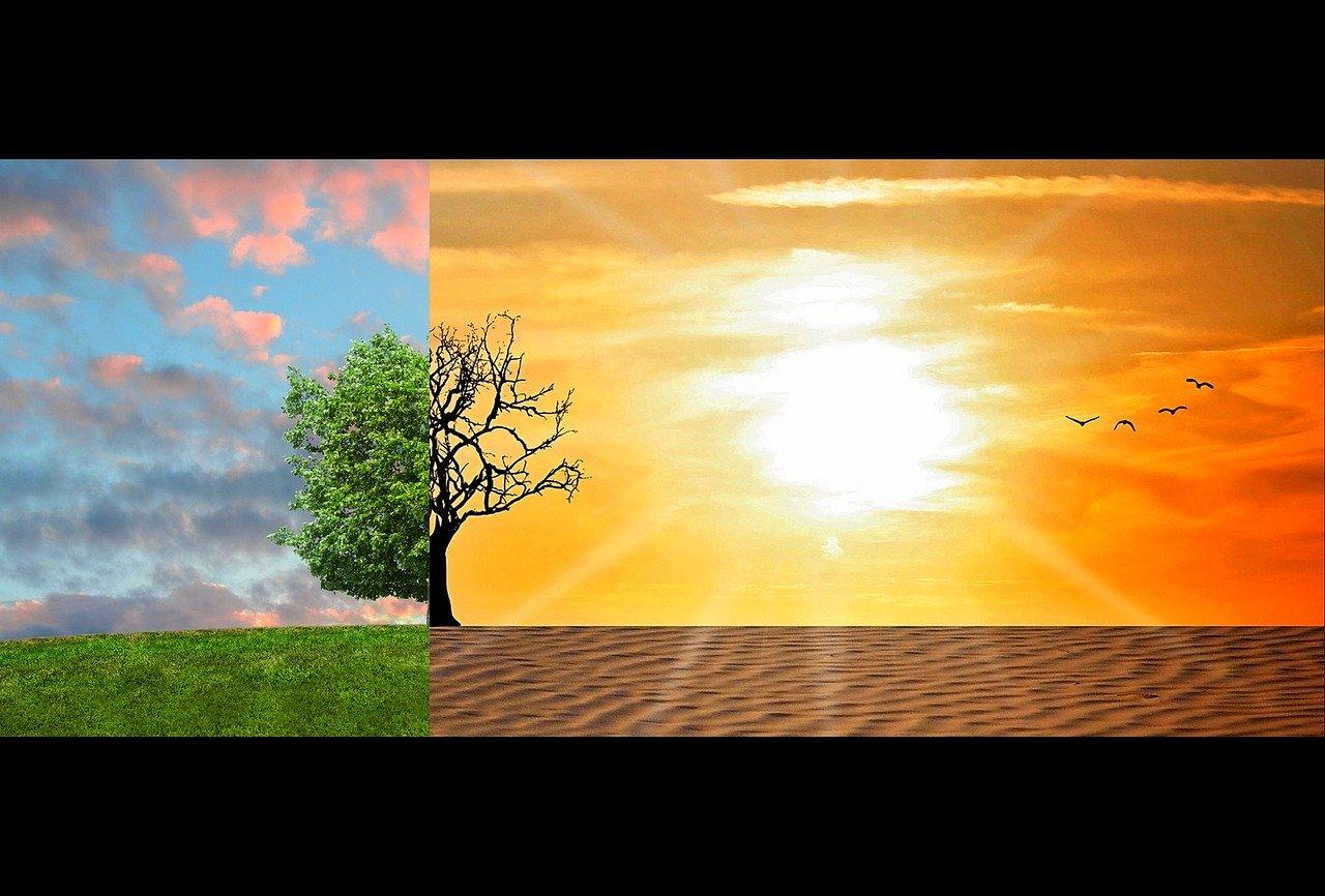 Nestlé accelereaza actiunile de combatere a schimbarilor climatice si se angajeaza sa produca zero emisii nete pana in 2050