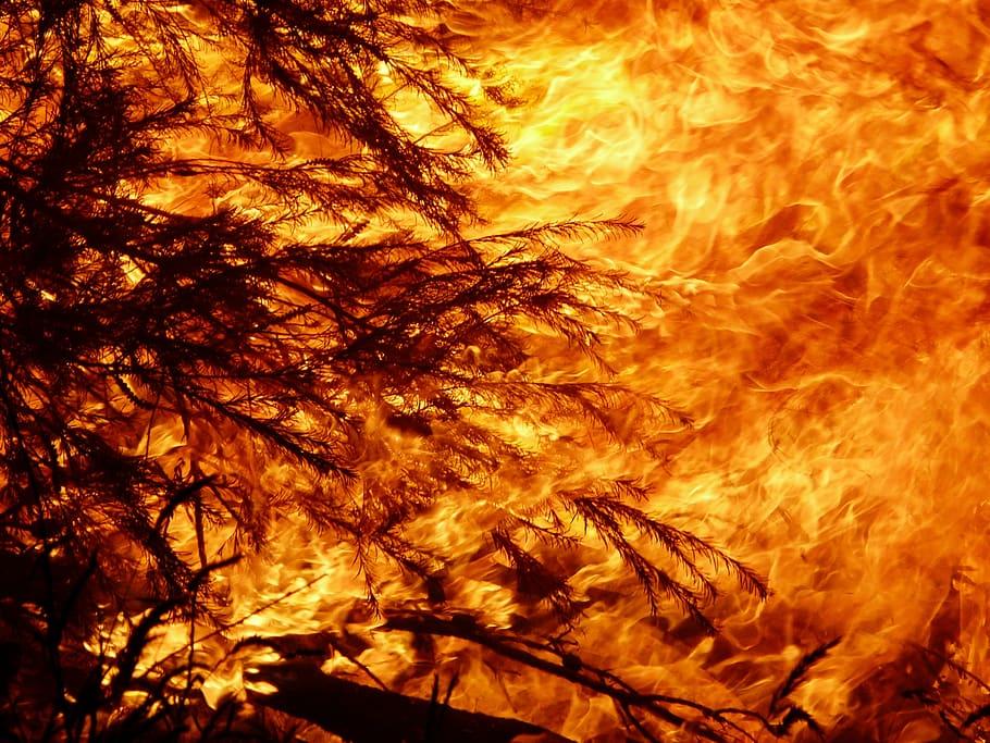 Fumul din urma incendiilor din Australia vor afecta intreg globul, spun cercetatorii!